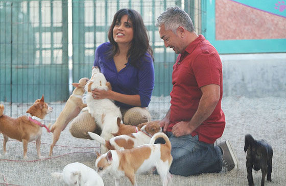 Dog whispering with Cesar Millan