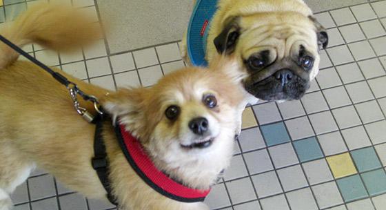 Doggie Pwesh - Photo by Mar Yvette