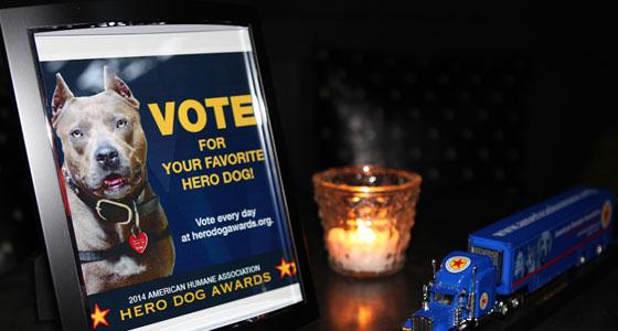 Hero Dog Awards - Dano Photography