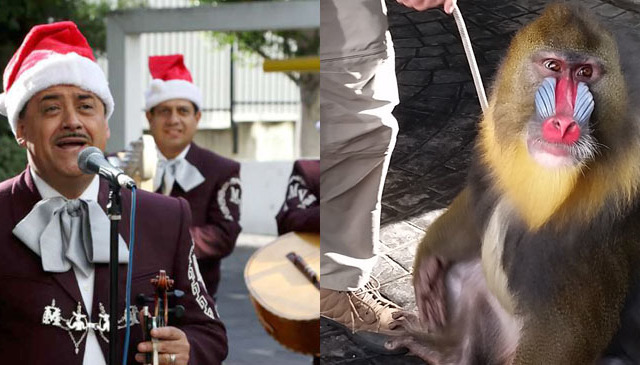 My Holiday Fantasy: Mariachi & Lots of Animals!
