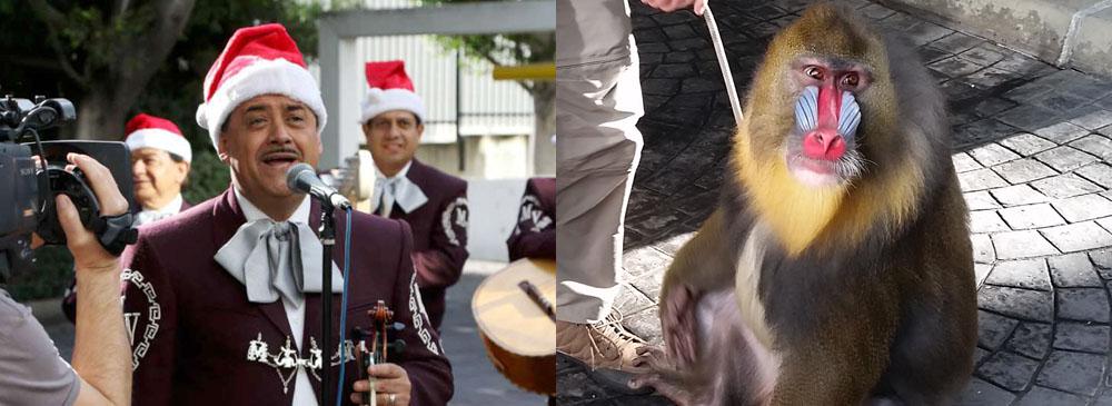 My Holiday Fantasy: Mariachi & Lots of Animals!