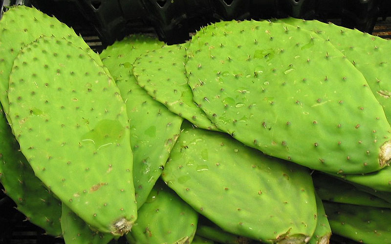 Soothe your scalp with nopales