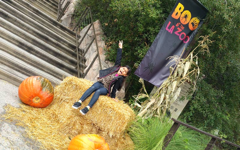 Let's get ready for Boo at the LA Zoo!