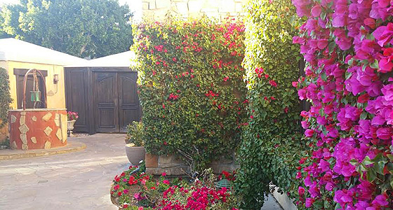 The wishing well and vibrant bougainvillea at Miramonte Resort & Spa