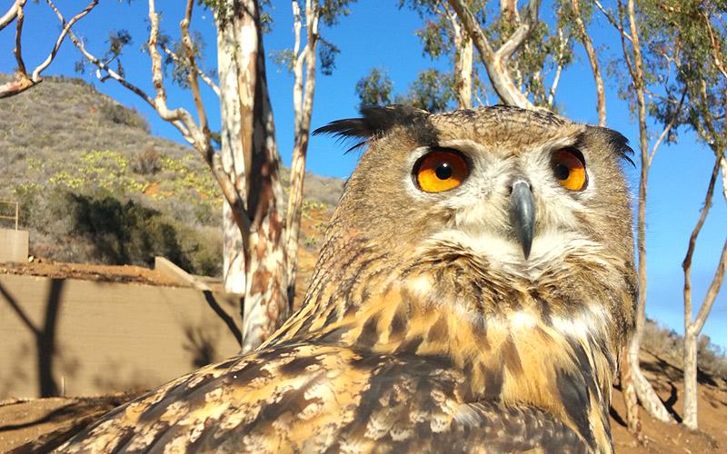 Wise owl - Photo by Mar Yvette