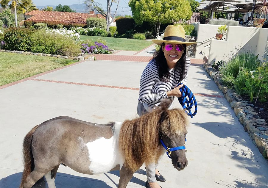 The Inn at Rancho Santa Fe: Rock'N Horse Minis