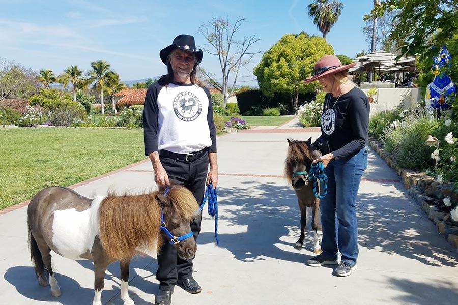 Rock N Mini Horses